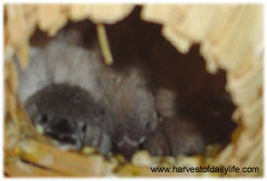 baby-finches-looking.jpg