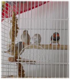 4-finches.jpg